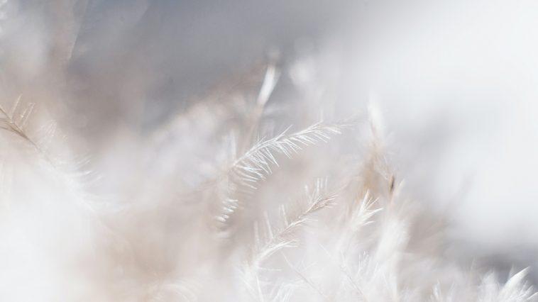 dun vinterjacka dunjacka dragar