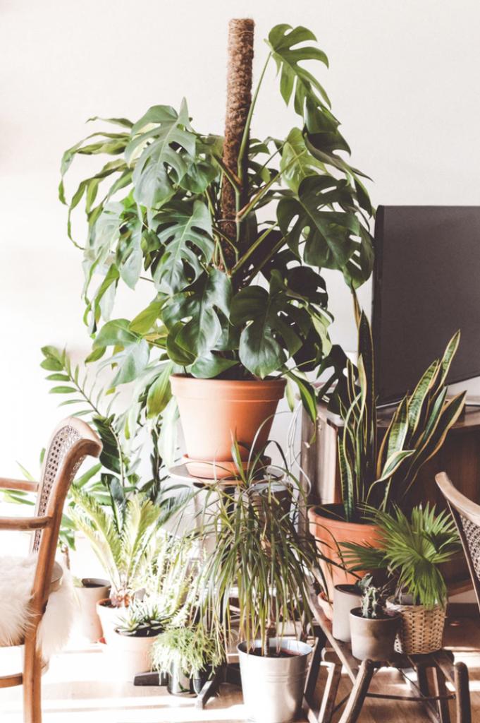 växter i vardagsrum blir allt mer populärt