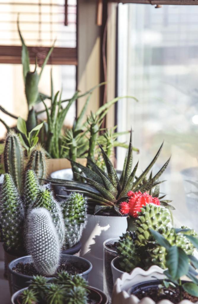 Växter i hemmet är nya trenden för millennials