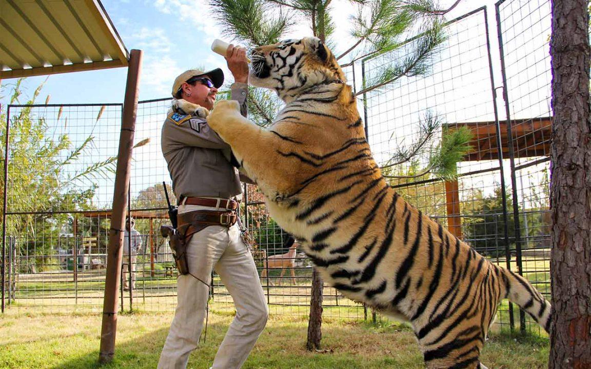 Nyheter om Tiger King