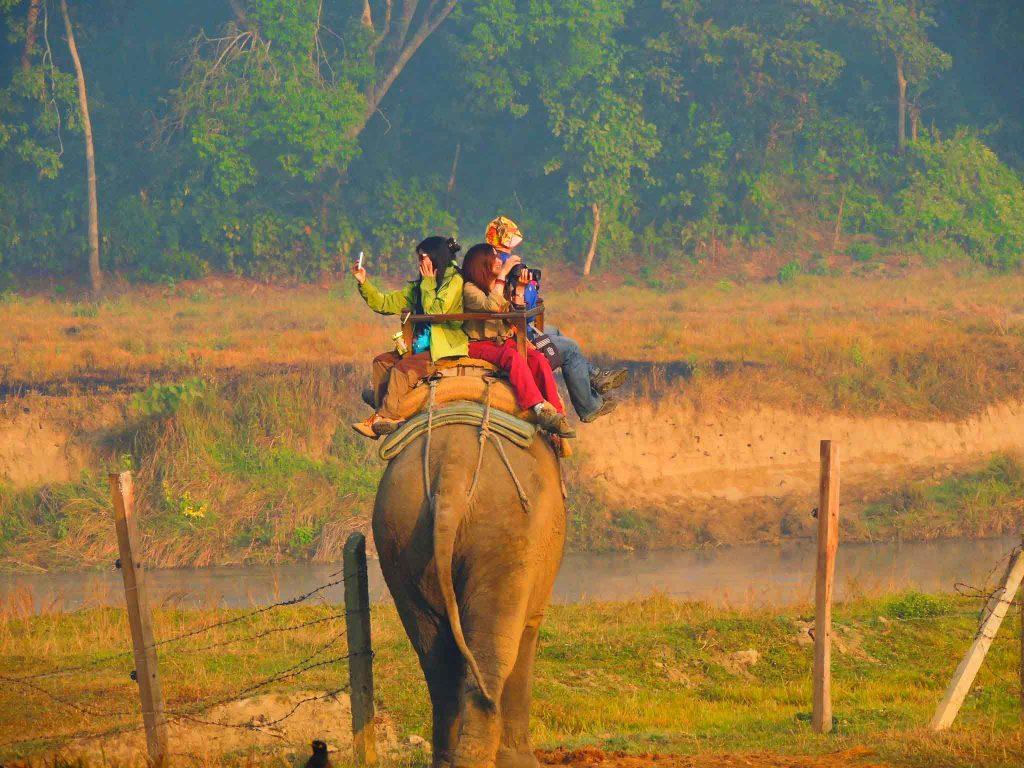 Varför man inte ska rida på elefanter