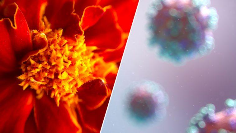 skillanden melllan pollenallergi och covid 19 symtom