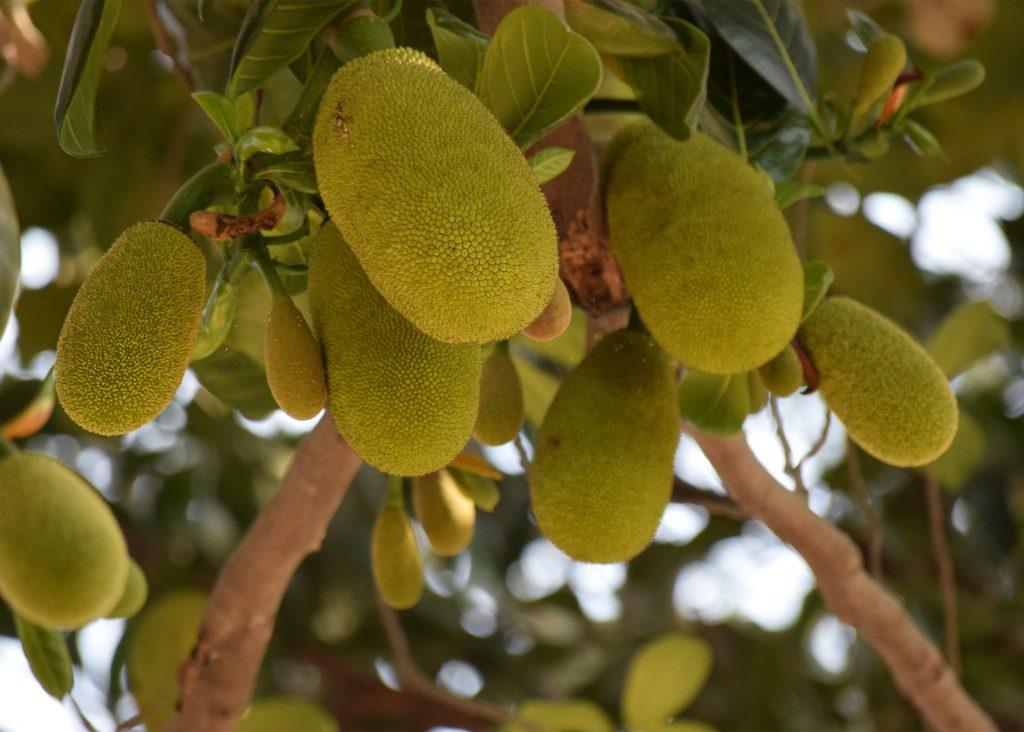 jackfruit recept smak