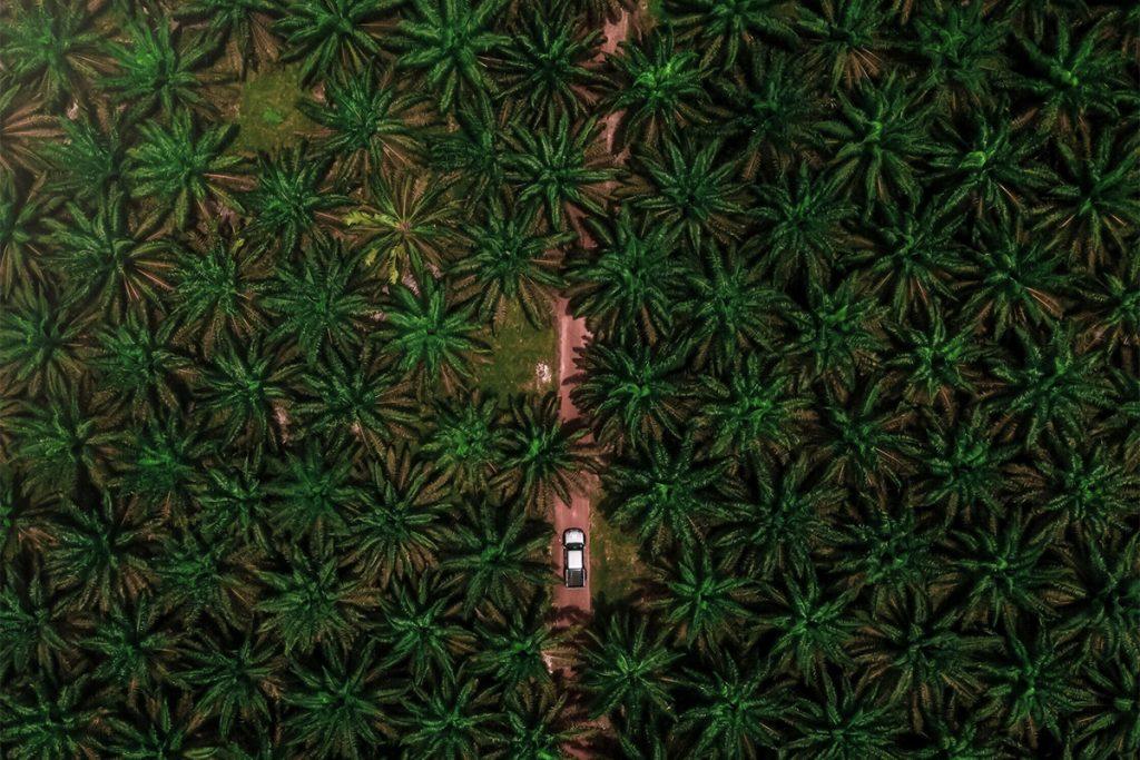 palmoljaskog